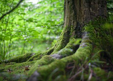 Servicii ecosistemice